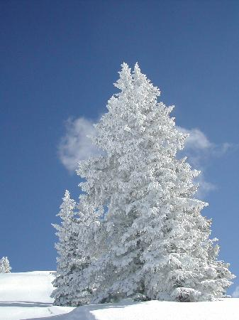 Vail Run Resort: Winter Wonderland