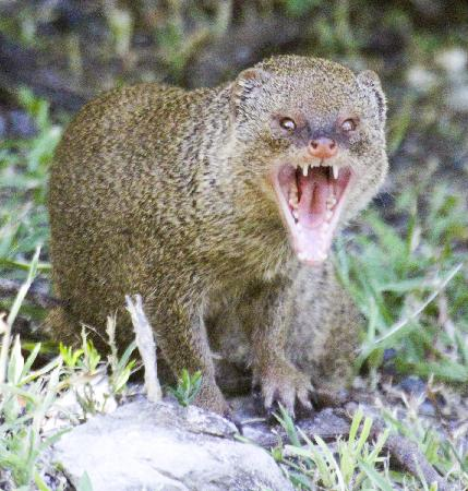 Image result for mongoose