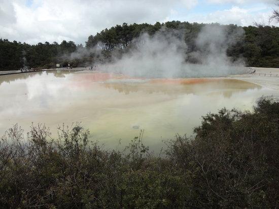 Mokoia Downs Estate B&B : the geysers