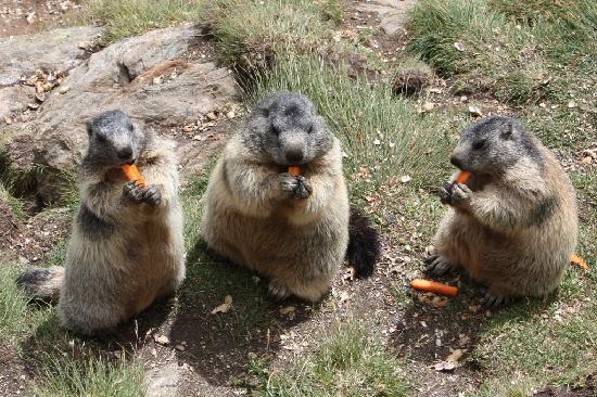 Park Hotel : le mie amiche le marmote