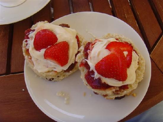Mitchum's Campsites: Cream Tea at Sandleigh