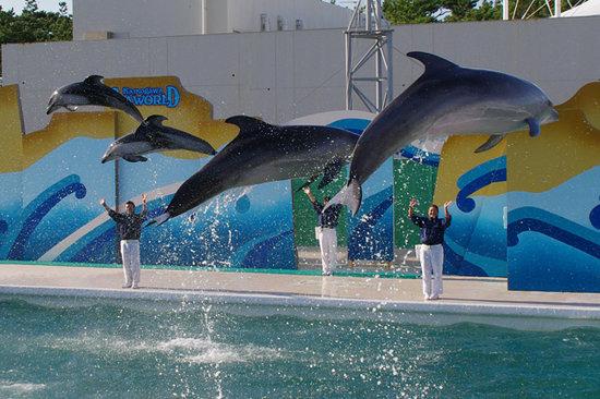 Kamogawa SeaWorld: 日本屈指の素晴らしいパフォーマンスが自慢