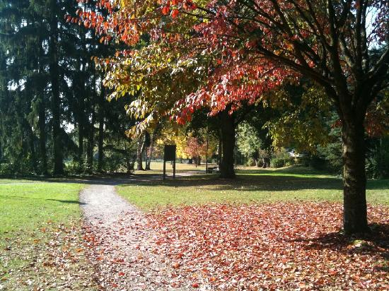Apart-Hotel Bad Soden : Beautiful walk in the park in Autum