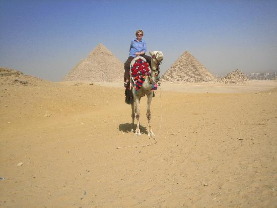 Jana Private Day Tours: a gentle camel