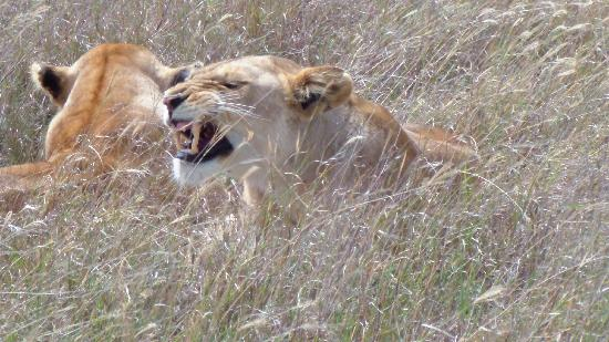 Basecamp Masai Mara: 2