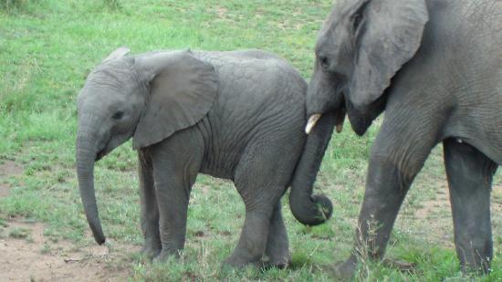 Basecamp Masai Mara: 3