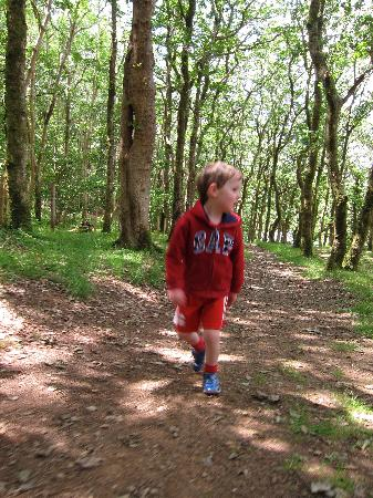 Barcdy Caravan & Camping Park: walking in the woods