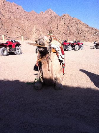 Sinai Safari Adventures : Fab Experience