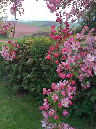 Blossom time at May Hill View