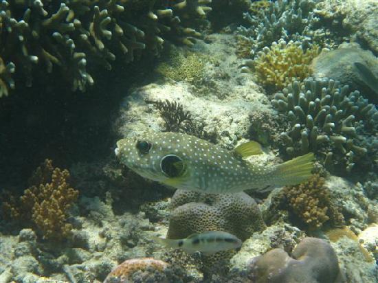 Gusung Indah: Snorkeling 1