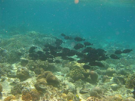 Gusung Indah: Snorkeling 2