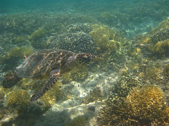 Gusung Indah: Snorkeling 4