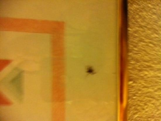 Motel 6: Spider in picture