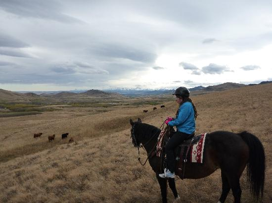 Centre Peak High Country Adventures: Passing the cattle.