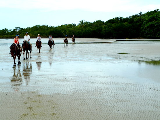 Cape Tribulation Horse Rides: Horse train on the beach