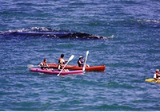 Walker Bay Adventures: Great way to see whales, dolphins & seals