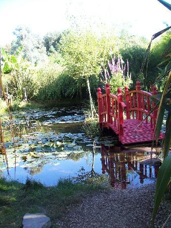 Parc Floral et Tropical de la Court d'Aron: Jardin japonais