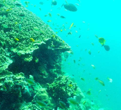 Nalusuan Island Resort: dive two