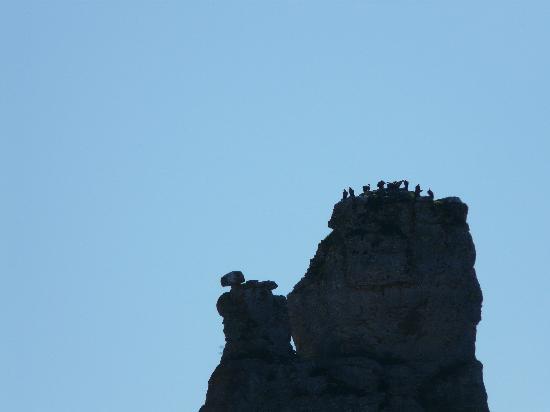 Orbaneja del Castillo: Buitres