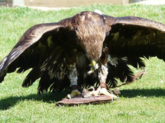Sendaviva: Aguila