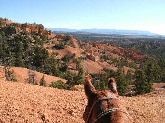Ruby's Horseback Adventures