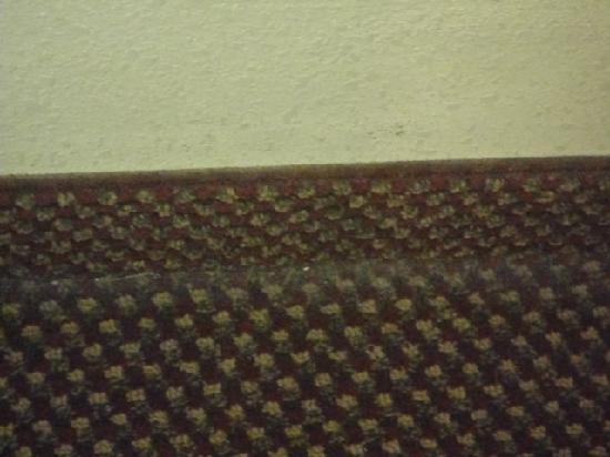 Super 8 Decatur/Dntn/Atlanta Area: carpet