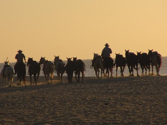 ‪‪Casa Del Mar Beach Condos‬: Horse back riders on the beach‬