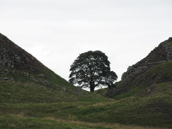 Norgate B&B: Hadrians Wall Sycamore Gap