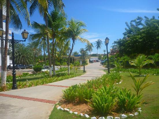 Hesperia Playa El Agua : jardinería del hotel hesperia