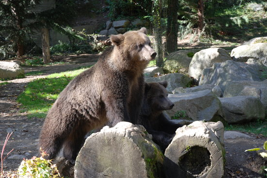 Ayzac-Ost, France: L'ours!