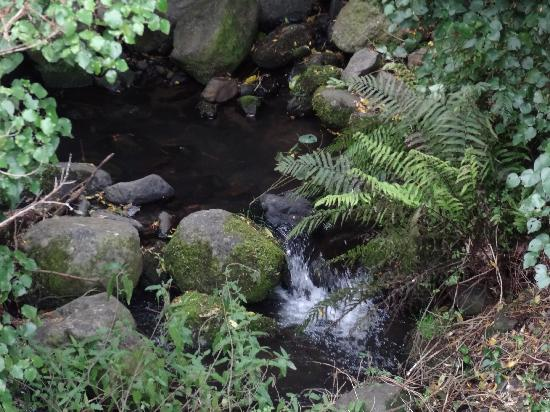 Coombe Farm Bed and Breakfast: Stream and native bush
