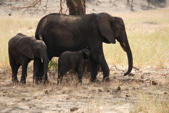 Kirurumu Tarangire Lodge: Elephants in Tarangire National Park