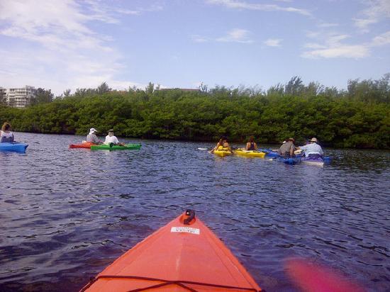 I Kayak Sarasota: Mangroves Lido Key