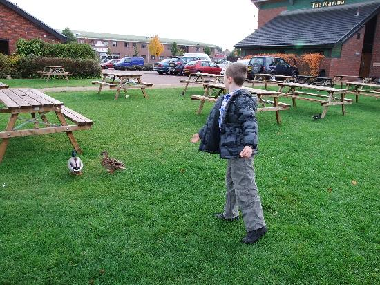 Brewers Fayre Marina: feeding the ducks with breakfast crusts