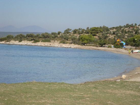 Apollonium Spa & Beach: Local beach