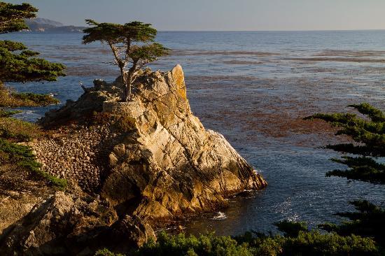 Sea View Inn: The Lone Cyprus Tree