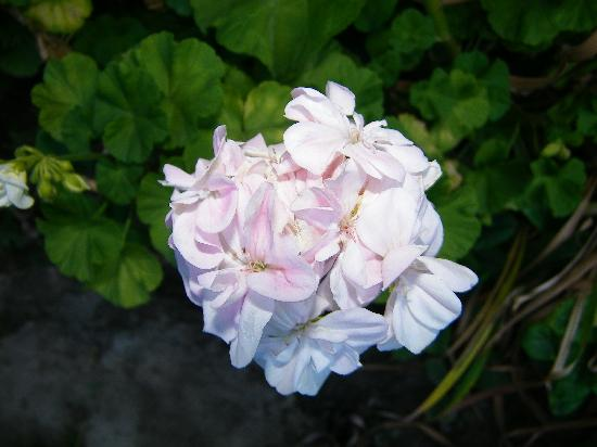 Retreat Cottages: Beautiful flower in Cottage Garden
