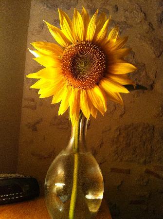 Le Gargantua: a local sunflower