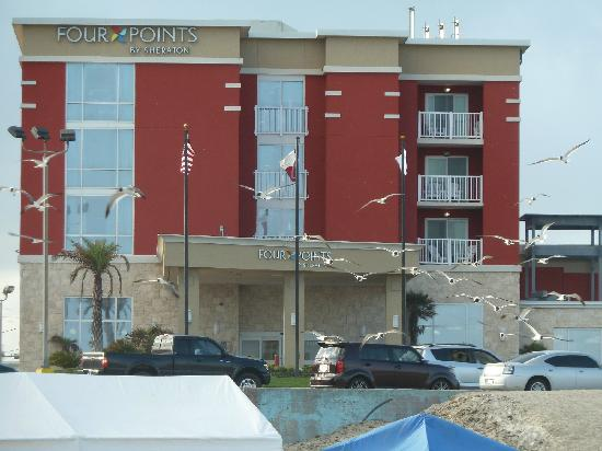 Four Points By Sheraton Galveston: hotel  from sea front. seagulls cost extra!