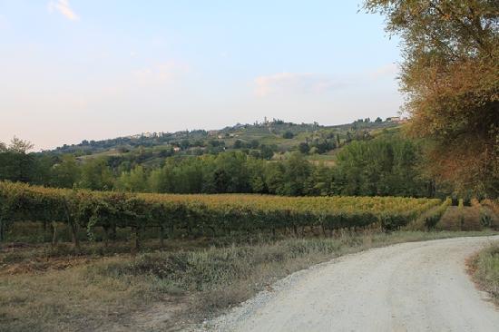 Agriturismo Poggiacolle: Road to the farmhouse