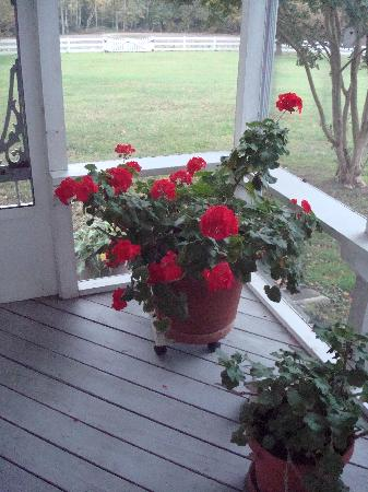 The Bed and Breakfast at Peace Hill: Back porch