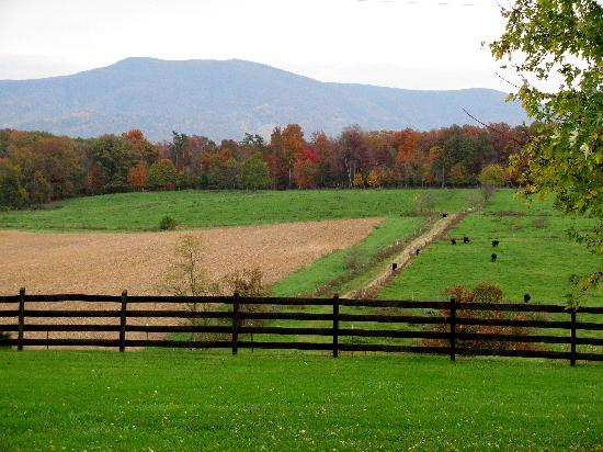 Piney Hill Bed & Breakfast: view from the house