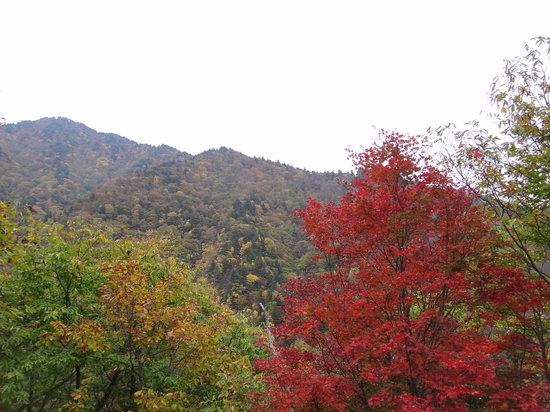 Tohoku, اليابان: 紅葉1