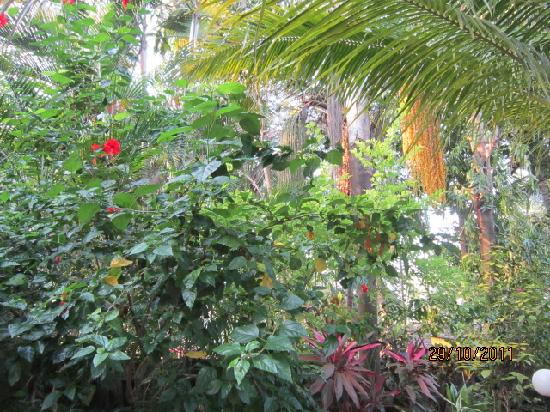 Palm Grove Cottages: natures beauty , palm tree flower