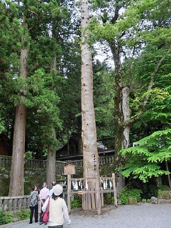 Suwa Shrine: 御柱