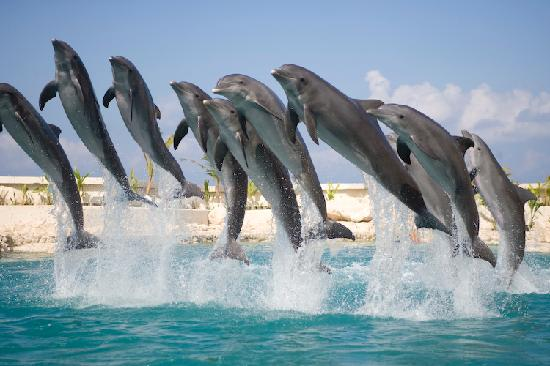 Dolphinaris Cancun : The Dolphin Crew