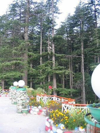Hotel Mountain Top: terrace garden