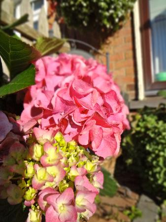 Seamount House : hydrangea welcomes you