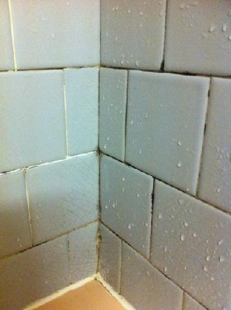 Avalon Motel: shower walls ( was like this in whole shower).