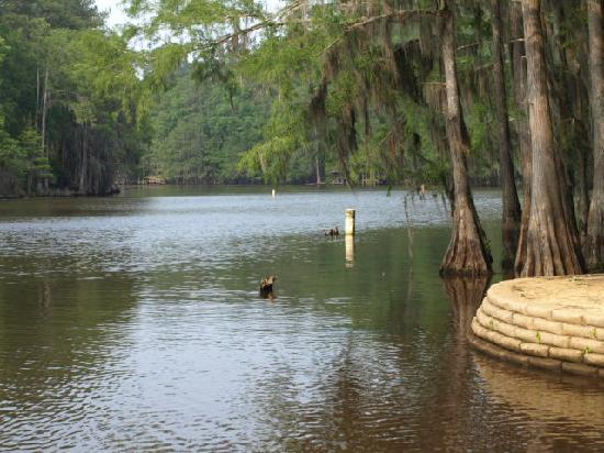 Lots of color in one of boat lanes picture of caddo lake for Caddo lake fishing